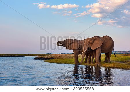 During A Beautiful Safari I Photographed Three African Elephants While Drinking Along The Banks Of T