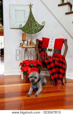 A warm, welcoming entry way greets guests in this home decorated for the Christmas holiday. A gray dog is perfect with the festive decor.