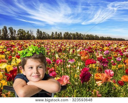 Spring in Israel. Picturesque kibbutz field of flowering garden buttercups. Cirrus thin clouds. The concept of active, ecological and photo tourism