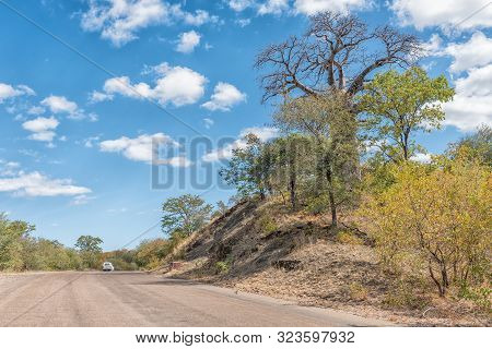 Kruger National Park, South Africa - May 15, 2019: A Baobab Tree, Andansonia Digitata Next To Road H