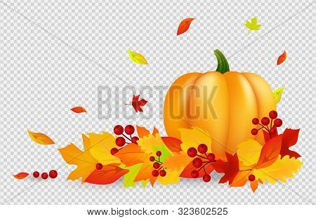 Autumn Background. Thanksgiving Vector Banner With Pumpkin Gold Red Leaves Isolated On Transparent B