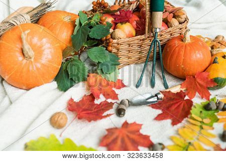 Autumn composition consisting of ripe pumpkins and apples, walnuts, acorns, leaves and garden worktools