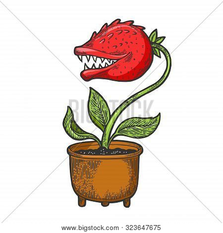 Cartoon Flower With Teeth Sketch Engraving Vector Illustration. Tee Shirt Apparel Print Design. Scra