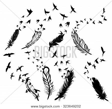 Set Of Feathers With Birds. Collection Of Stylized Feathers With A Flock Of Birds. Black White Vecto