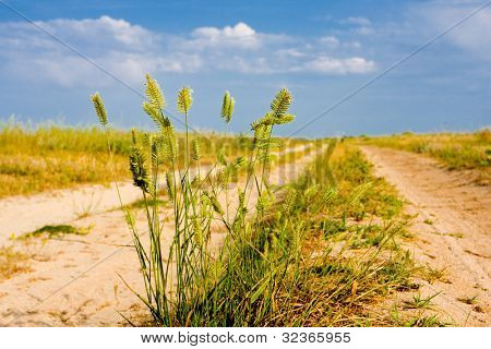 herb on rural road in summer day