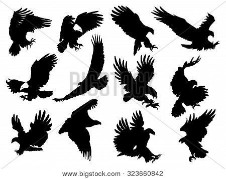 Set Of Silhouette Eagles. Collection Of Flying Eagles. Black White Illustration Of Birds Of Prey. Ta