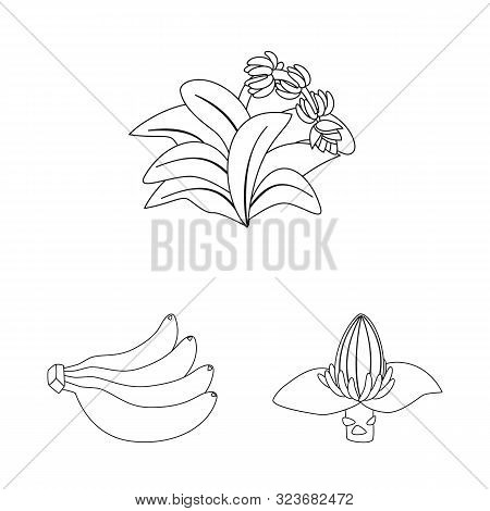 Vector Design Of Organic And Potassium Logo. Collection Of Organic And Diet Stock Symbol For Web.
