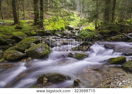 Forest Mountain Landscape At Summer:  Fast River Flows In A Coniferous Forest Among Mossy Stones. Ri