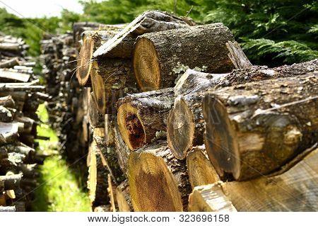 Rangée De Bûches De Bois En Campagne