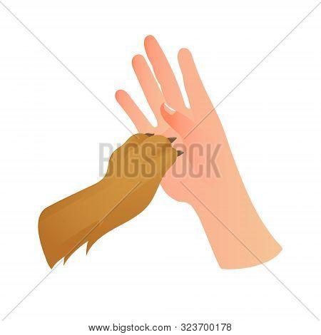 Human Hand The Paw Of An Animal