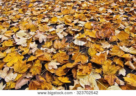 Fall Background. Many Leaves On The Ground.