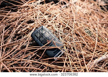 Lost Car Keys Lying On Pine Forest Ground
