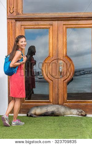 Galapagos tourist funny image with sea lion blocking door to hotel resort on San Cristobal, Galapagos, Ecuador. Wildlife, nature and tourism on Galapagos Islands.
