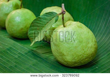 Fresh Guava Fruit.