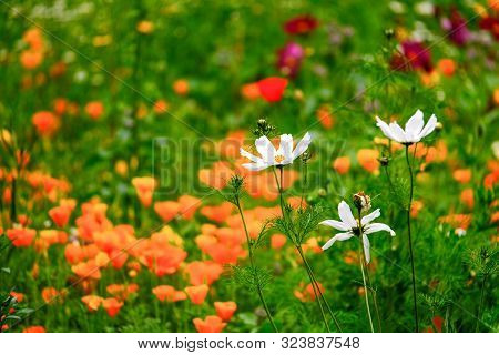Close Up Area Of Wild Meadow Flowers Of Various  Colours And Species
