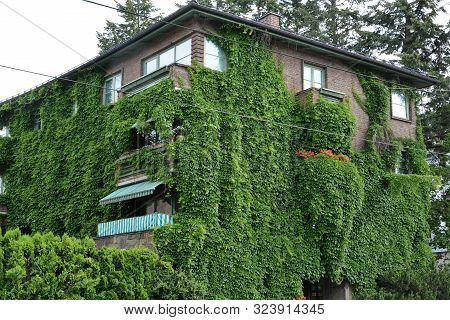 House With Green Walls As Vertical Garden