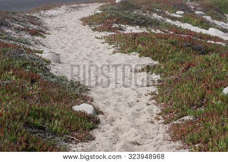 This Is An Image Of Sand And Ice Plant Along The Coast Of Pacific Grove, California.