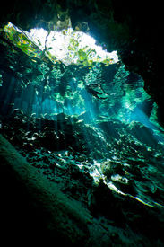 Deep Inside The Cenote