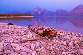 Driftwoof On Jackson Lake At Sunrise  In Colter Bay Village In Grand Teton National Park Wyoming