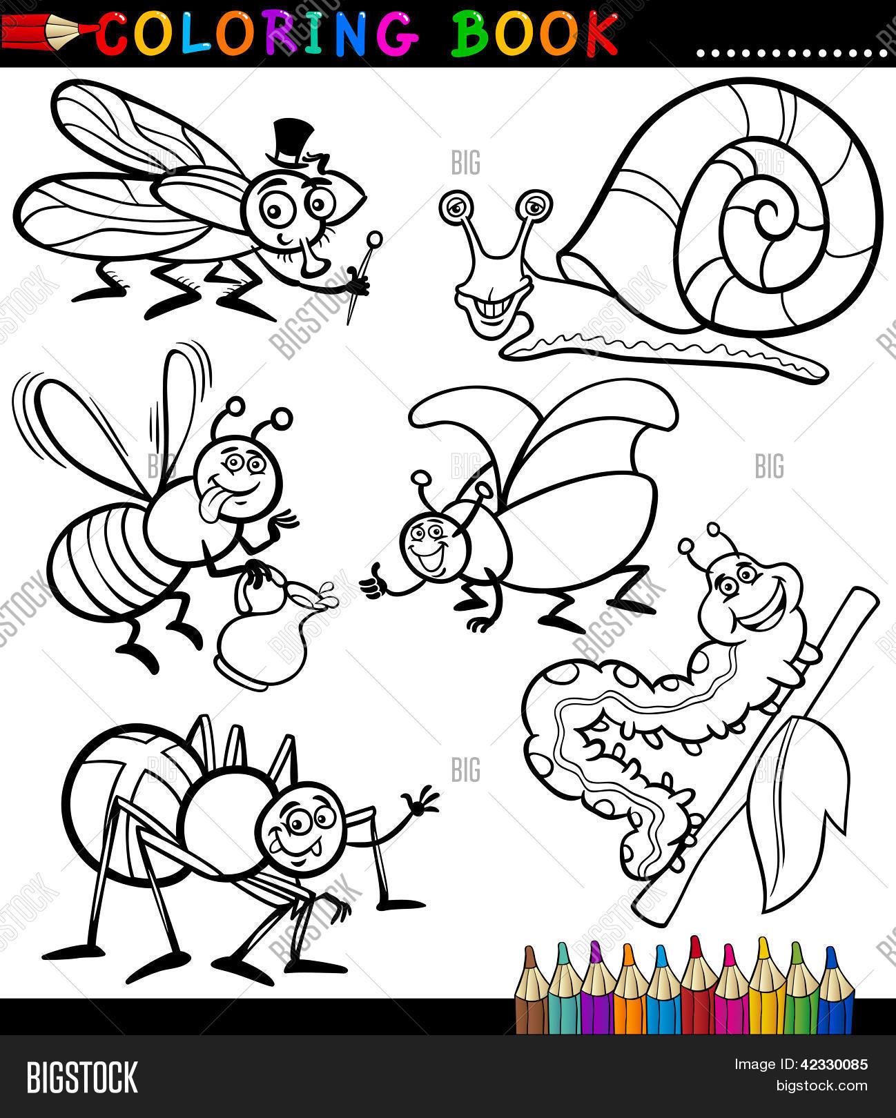 Vector y foto Insectos Y Bichos Para Colorear   Bigstock