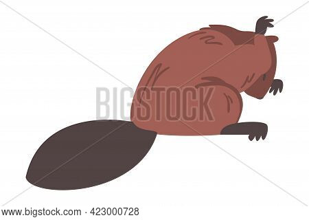 Cute Brown Beaver Licking Paw, Wild Rodent Animal Cartoon Vector Illustration