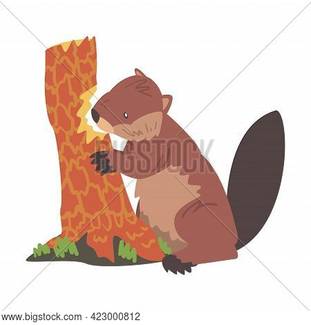 Cute Beaver Gnawing Old Tree Trunk, Brown Rodent Wild Mammal Animal Cartoon Vector Illustration