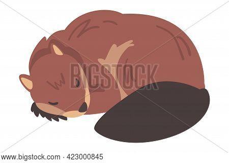 Cute Brown Sleeping Beaver, Wild Rodent Mammal Animal Cartoon Vector Illustration