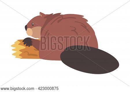 Brown Beaver Gnawing Log, Wild Rodent Mammal Animal Cartoon Vector Illustration