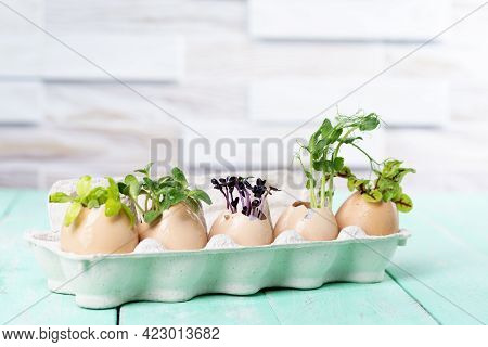 Microgreen Sprouts In Eggshells In A Cardboard Tray On A Wooden Kitchen Table. Zero Waste Concept