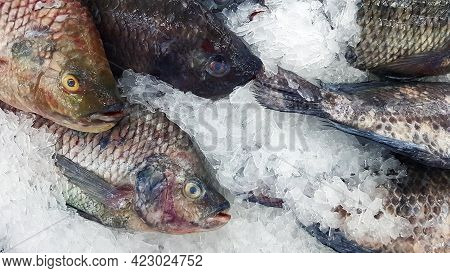 Many Fresh Tilapia Freeze On Iced For Sale At Fish Market Or Supermarket. Group Of Animal, Uncooked