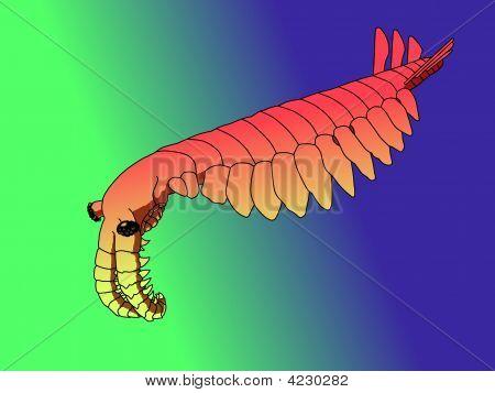 Anomalocaris Canadensis