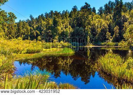 Travel to New Zealand. The smooth mirror surface of the water reflects the trees and grass. Glacial Lake Matheson is surrounded by forests. The concept of ecological, active and photo tourism