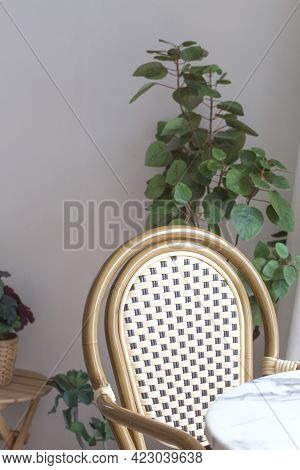 Vintage Wooden Chairs With Mirrors And Plant In Living Room