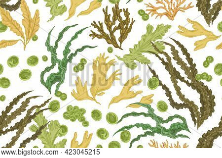 Seamless Botanical Pattern With Different Realistic Seaweeds On White Background. Repeating Texture