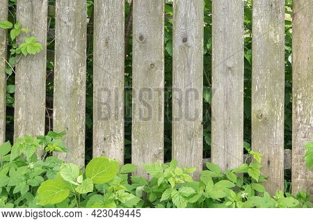 Old Wooden Picket Fence With Grass And Bushes Sprout Through It
