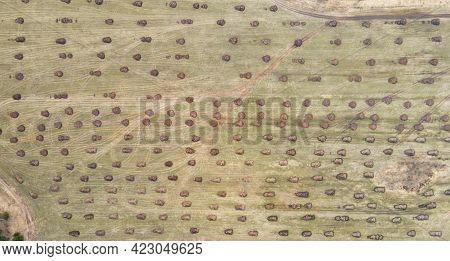 Round Heaps Of Manure On A Large Farm Field In The Countryside. Application Of Organic Fertilizers I