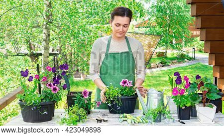 A Woman Gardener Transplants Flowers Into Pots At Her Work Table On A Sunny Spring Day. Planting Flo