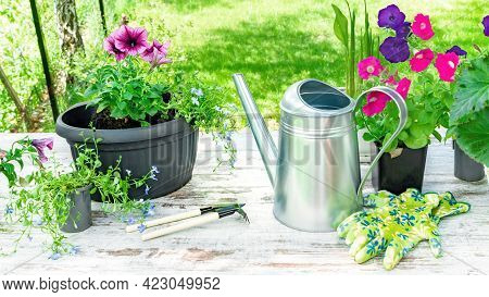 Planting Flowers In Pots In Spring. Arrangement Of Flowers, Pots, Watering Cans And Garden Tools To