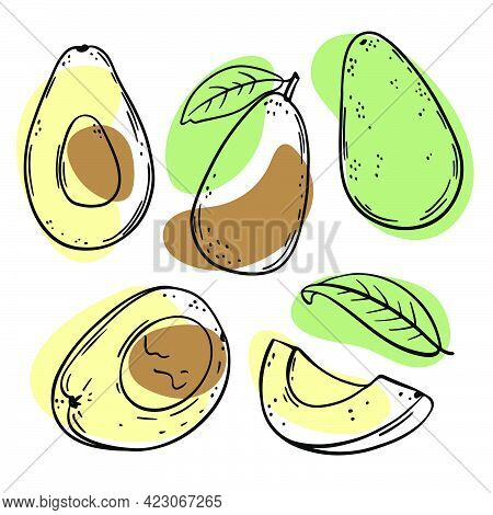 Avocado Delicious Tropical Fruit Whole And Slices With Leaves For Design Of Organic Natural Products
