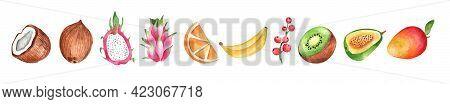 Watercolor Set With Fruit. Banana, Coconut, Mango, Pitahaya, Currant, Berry, Kiwi, Orange. Watercolo