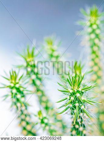 Close up macro of spikey cactus plant