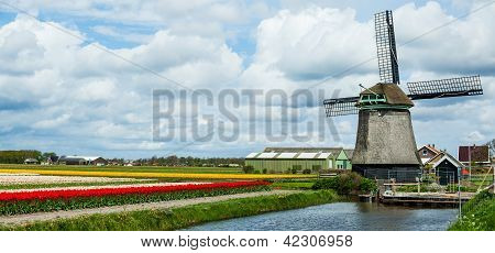 Springtime In Holland