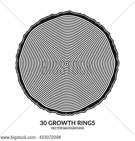 30 Growth Rings. Tree Rings And Saw Cut Tree Trunk. Can Be Used As 30th Anniversary Concept. Vector