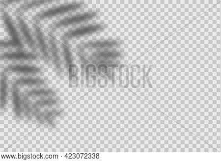 Palm Leaf Shadow. Overlay Effect With Tropical Leaves. Realistic Shade Mockup