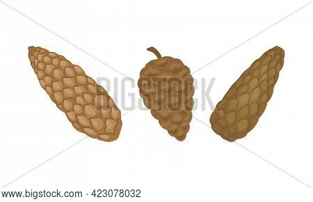 Brown Mature Pine Cone With Spirally Arranged Scales Vector Set.