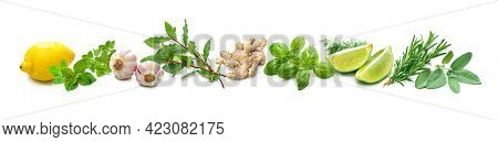 Panoramic background with bunches of fresh garden herbs and spices isolated on white