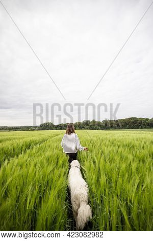 Woman With Big White Sheepdog Running On Green Rye Field. Freedom And Activity. Copy Space. Rear Vie