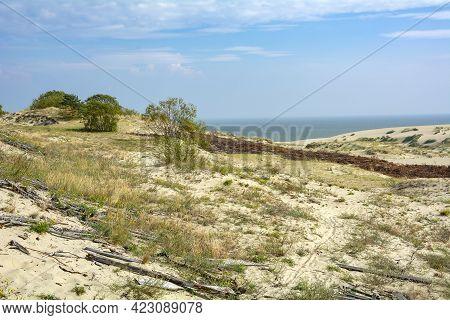 A Distinctive Landscape Of Sand Dunes On The Curonian Spit, The Kaliningrad Region