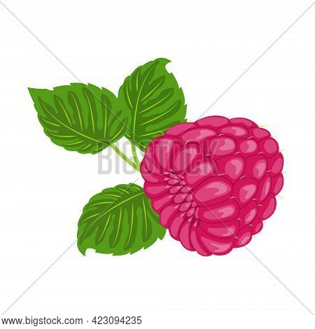 Fresh Ripe Red Raspberries With Green Leaves On A White Background Close-up. Organic Garden Or Fores