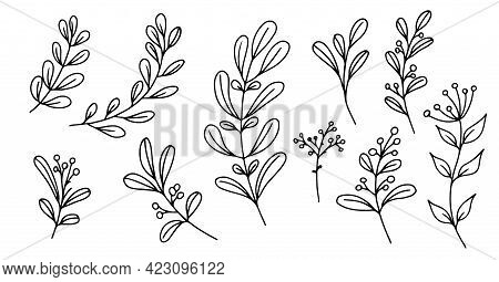 Set Of Hand-drawn Floral Elements, Doodle Plants And Branches On A White Background. Sketchy Element